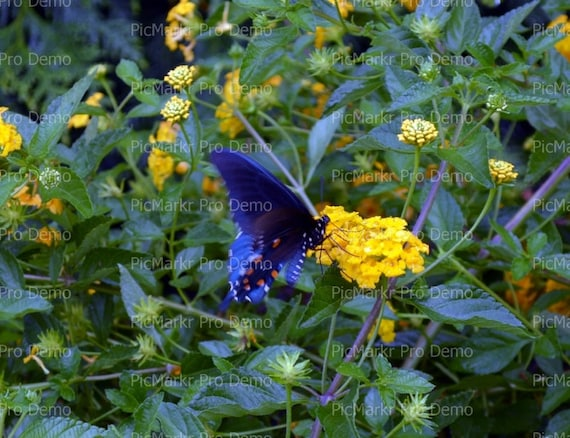Butterfly on Flower ~ Edible 2D Fondant Birthday Cake/Cupcake Topper ~ D21441