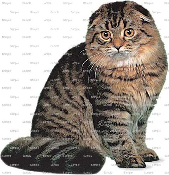 Cat - Scottish Fold - Edible Cake and Cupcake Topper For Birthday's and Parties! - D6466