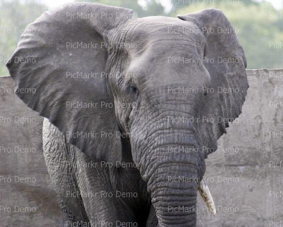Elephant ~ Edible 2D Fondant Birthday Cake/Cupcake Topper ~ D21296