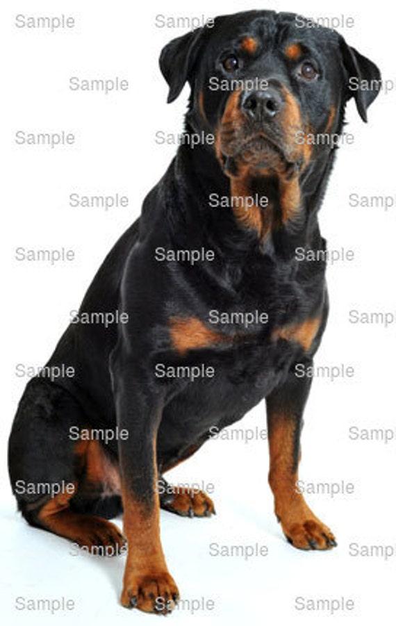Rottweiler Hond Verjaardag Eetbare Taart En Cupcake Topper Etsy