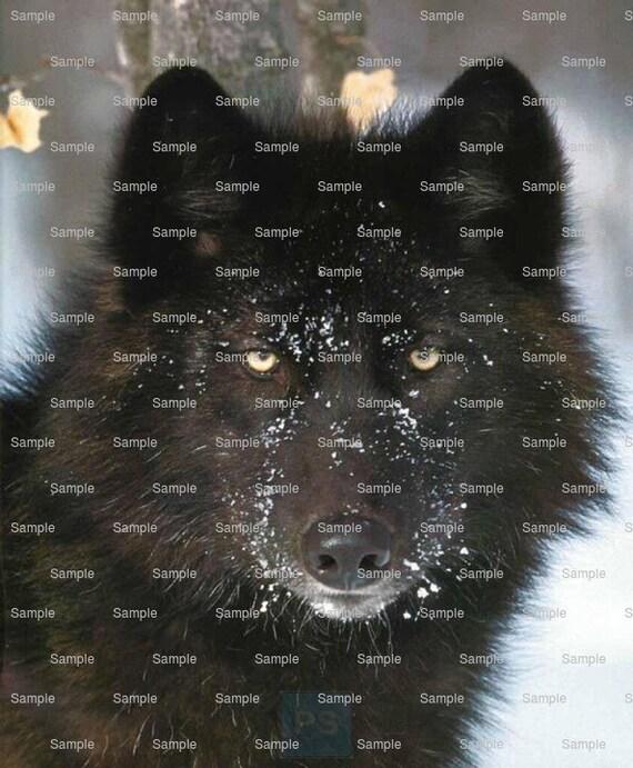 Black Wolf ~ Edible 2D Fondant Birthday Cake/Cupcake Topper ~ D5765