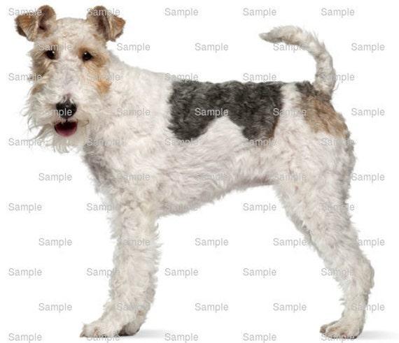 Wire Fox Terrier Dog Birthday ~ Edible 2D Fondant Birthday Cake/Cupcake Topper ~ D6761