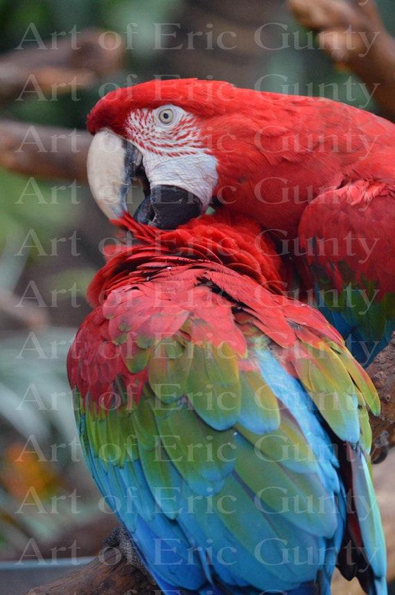 Jungle Safari Parrot Birthday ~ Edible 2D Fondant Birthday Cake/Cupcake Topper ~ D22373