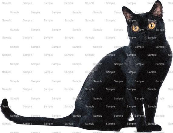Cat - Bombay ~ Edible 2D Fondant Birthday Cake/Cupcake Topper ~ D6444