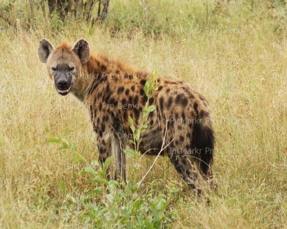 Hyena ~ Edible 2D Fondant Birthday Cake/Cupcake Topper ~ D21108