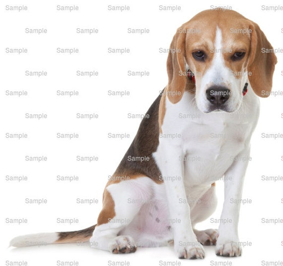 Beagle Dog Birthday - Edible Cake and Cupcake Topper For Birthday's and Parties! - D6605