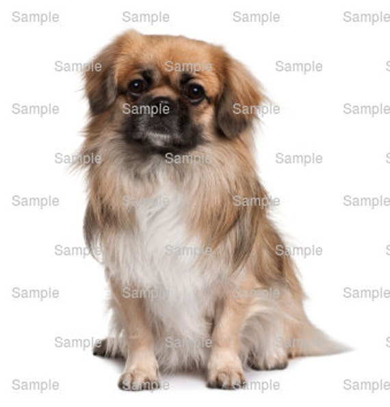 Tibetan Spaniel Dog Birthday ~ Edible 2D Fondant Birthday Cake/Cupcake Topper ~ D6750