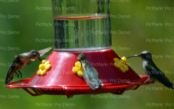 Hummingbird - Edible Cake and Cupcake Topper For Birthday's and Parties! - D21469