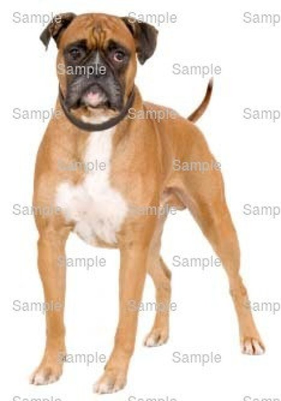 Boxer Dog Birthday ~ Edible 2D Fondant Birthday Cake/Cupcake Topper ~ D6614