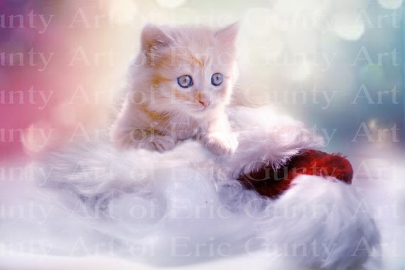 Pretty Kitten Birthday ~ Edible 2D Fondant Birthday Cake/Cupcake Topper ~ D24027