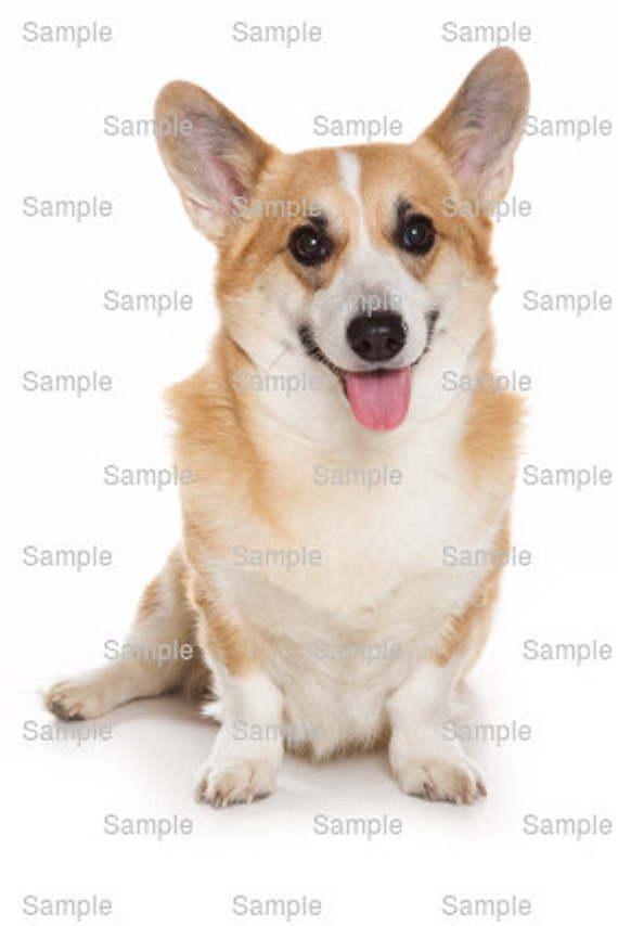 Pembroke Welsh Corgi Dog Birthday - Edible Cake and Cupcake Topper For Birthday's and Parties! - D6508