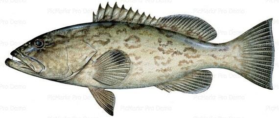 Grouper Ocean Fish Birthday ~ Edible 2D Fondant Birthday Cake/Cupcake Topper ~ D20453