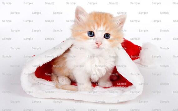 Cat - Christmas Kitten ~ Edible 2D Fondant Birthday Cake/Cupcake Topper ~ D6479