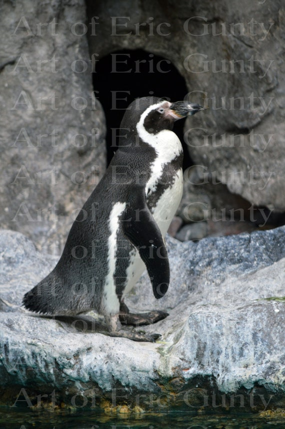 Arctic Penguin Birthday ~ Edible 2D Fondant Birthday Cake/Cupcake Topper ~ D22378
