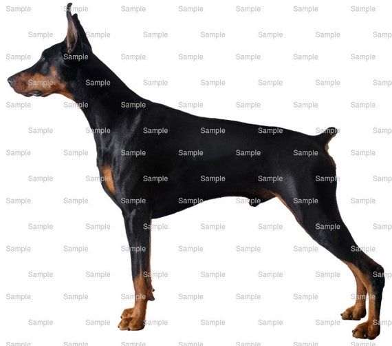 Doberman Pinscher Dog Birthday - Edible Cake and Cupcake Topper For Birthday's and Parties! - D6634