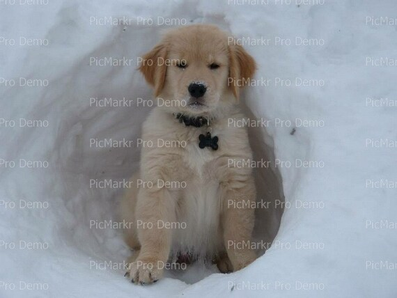 Golden Retriever Puppy Winter Birthday - Edible Cake and Cupcake Topper For Birthday's and Parties! - D20902