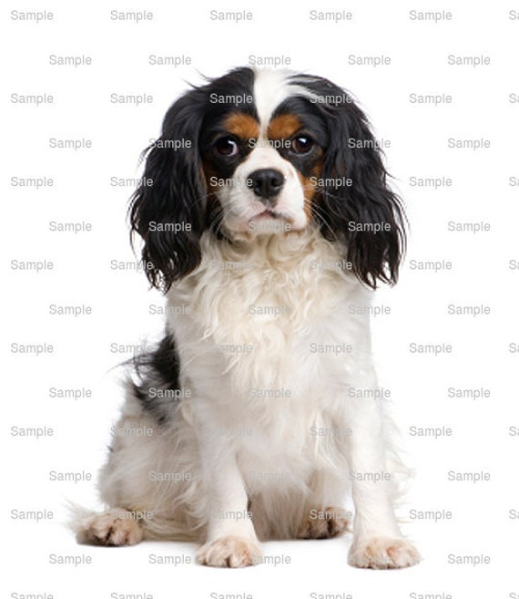 Cavalier King Charles Spaniel Dog Birthday - Edible Cake and Cupcake Topper For Birthday's and Parties! - D4969
