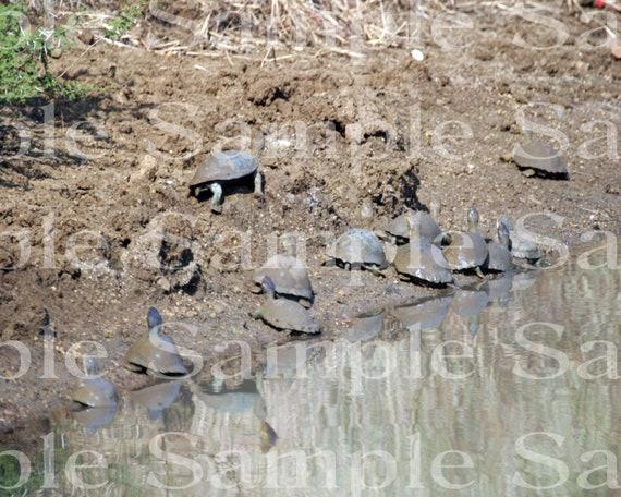 Jungle Turtles Safari Birthday ~ Edible 2D Fondant Birthday Cake/Cupcake Topper ~ D21074