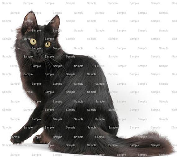 Cat - Turkish Angora (black) ~ Edible 2D Fondant Birthday Cake/Cupcake Topper ~ D6476