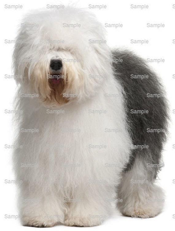 Old English Sheepdog Dog Birthday ~ Edible 2D Fondant Birthday Cake/Cupcake Topper ~ D6717