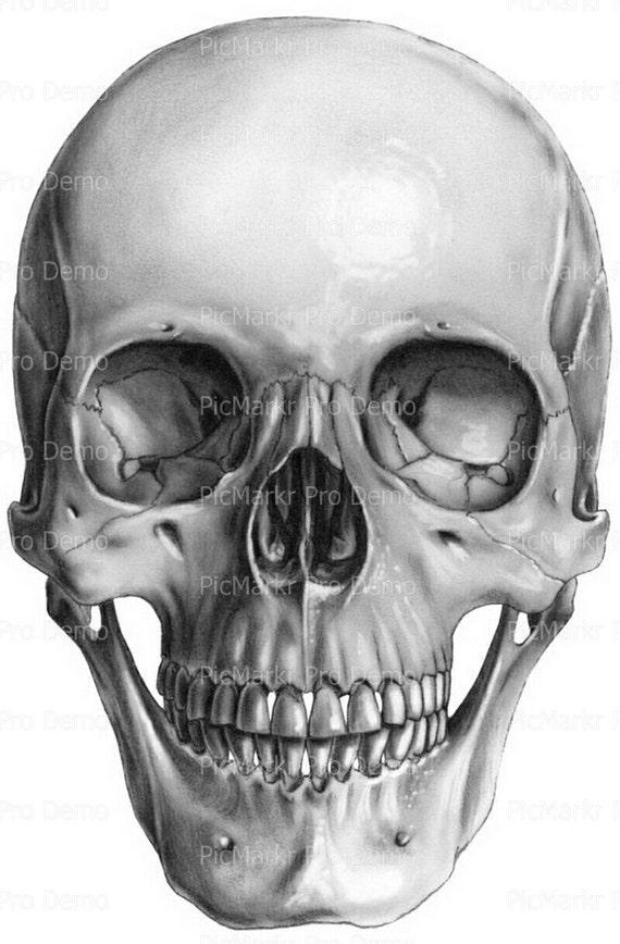 Skull Halloween ~ Edible 2D Fondant Birthday Cake/Cupcake Topper ~ D5820