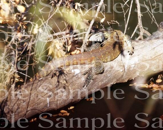 Jungle Lizard Safari Birthday ~ Edible 2D Fondant Birthday Cake/Cupcake Topper ~ D21072