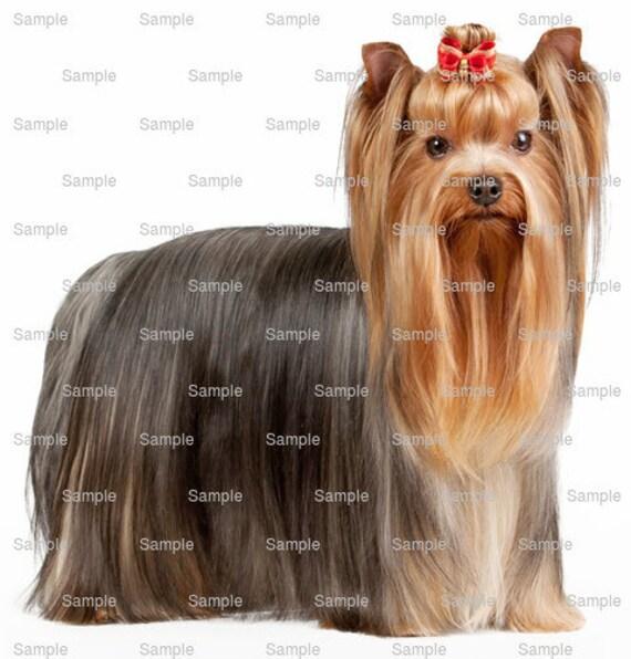 Yorkshire Terrier Dog Birthday ~ Edible 2D Fondant Birthday Cake/Cupcake Topper ~ D6763