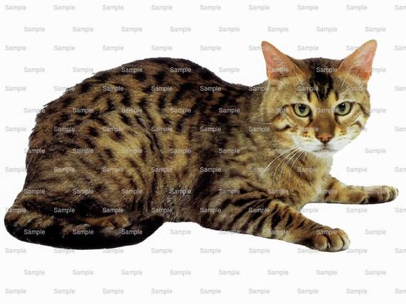 Cat - Bengal~ Edible 2D Fondant Birthday Cake/Cupcake Topper ~ D6442