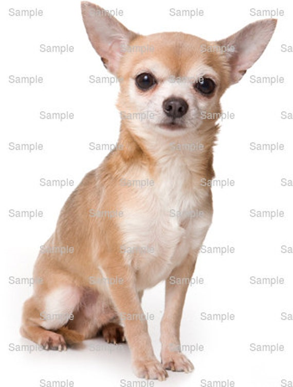 Chihuahua Dog Birthday - Edible Cake and Cupcake Topper For Birthday's and Parties! - D5411