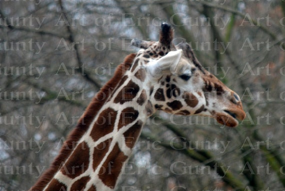 Giraffe African Safari Birthday ~ Edible 2D Fondant Birthday Cake/Cupcake Topper ~ D22369