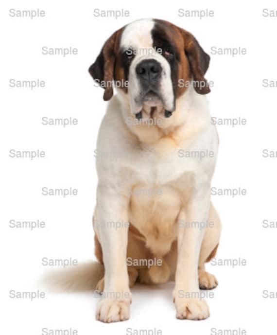 Saint Bernard Dog Birthday ~ Edible 2D Fondant Birthday Cake/Cupcake Topper ~ D6732