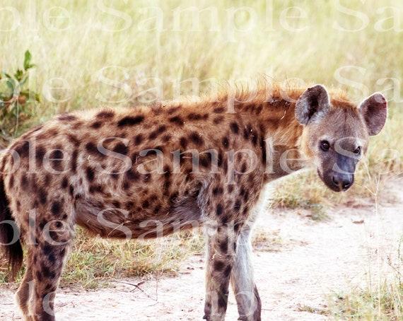 Hyena Jungle Safari Birthday ~ Edible 2D Fondant Birthday Cake/Cupcake Topper ~ D20922