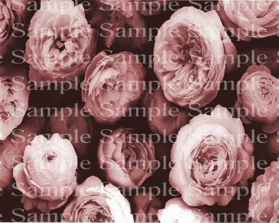 Pink Roses Birthday - Edible Cake and Cupcake Topper For Birthday's and Parties! - D24178