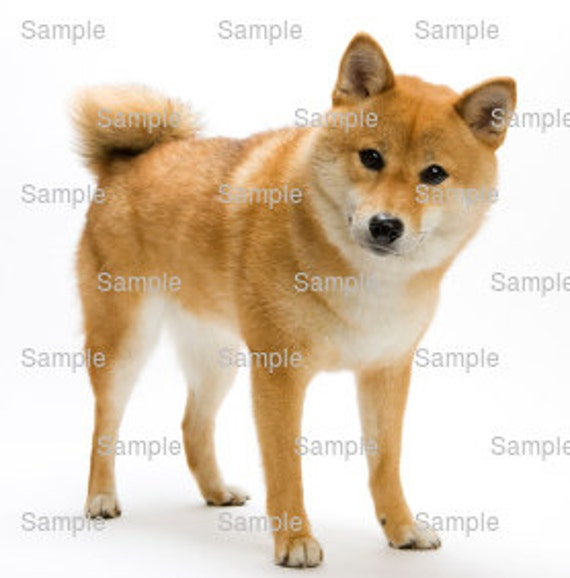 Shiba Inu Dog Birthday ~ Edible 2D Fondant Birthday Cake/Cupcake Topper ~ D4968
