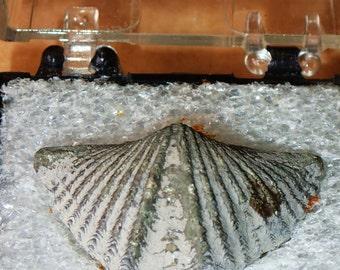 Fossil Ammonite ring Rare Pyritized Ammonite shell Simbircite Yin Yang crystalsilver ringAnxiety reliefhealing women Calming Care