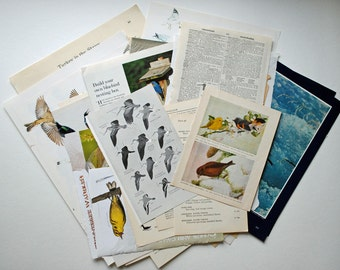 Bird Themed Vintage Paper Pack