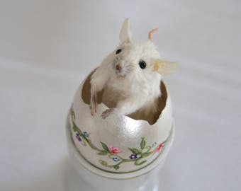 Wee Taxidermy Mouse in an Eggshell, Hand Painted Real Egg Shell, Vintage Porcelain Egg Cup, Housewarming Gift, Easter, Anthropomorphic Mouse