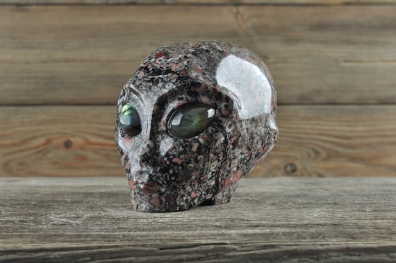 Natural Crinoid Fossil with Labradorite Alien Starbeing Crystal Skull, 3 inches!