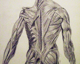 """Anatomy2   , Human anatomy poster, V2, 18"""" x 24"""". Look inside someone and this is what you may see (from behind).....hmmm..."""