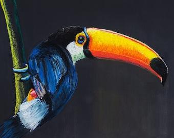 Brazilian Nature • Blue Tucan • Art Print