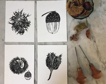 Set of 4 postcards - autumn nuts