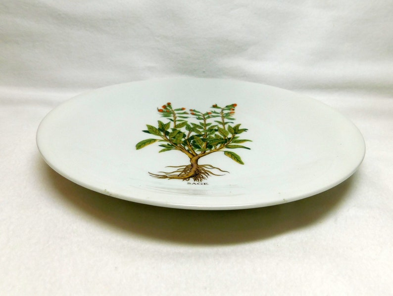 Vintage Berry Haute France Plate CNP Sage Plate Her Garden Spice Organic Image Kitchen Decor Dish Compagnie Nationale de Porcelaine Limoges