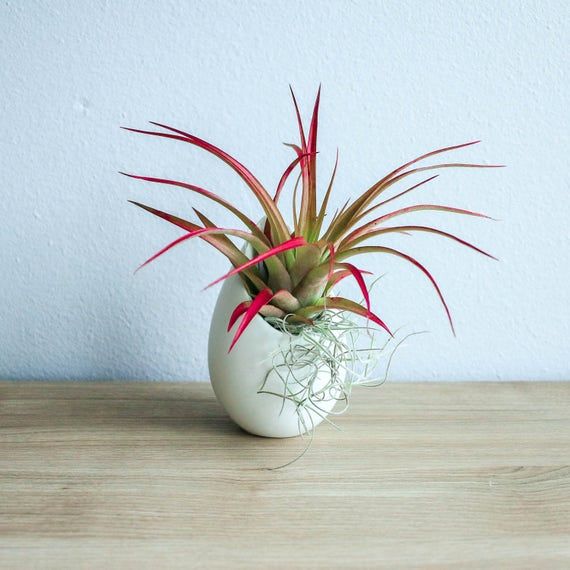 Hanging Air Plant Container Small Ivory Ceramic Vase With Etsy
