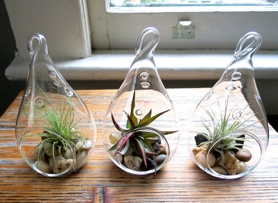 Fast FREE Shipping Set of 3 Funky Teardrop Designs 30 Day Guarantee Hanging Air Plant Terrariums Air Plants for Sale