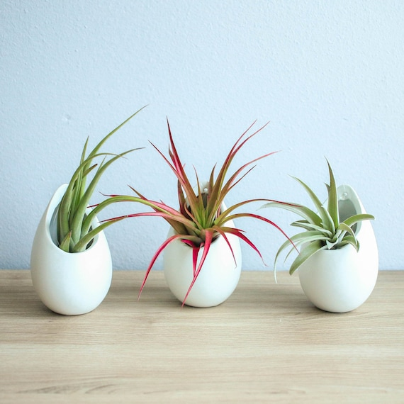 Hanging Air Plant Container 3 Large Ivory Ceramic Vases With Etsy