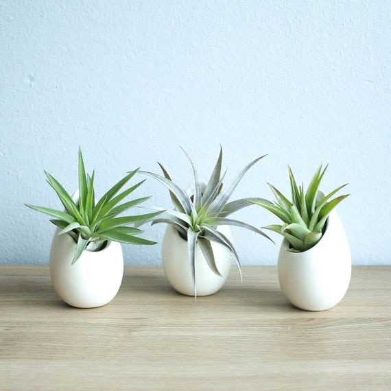 Hanging Air Plant Container 3 Mini Ivory Ceramic Vases With Etsy