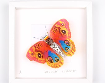 Orange Butterfly Framed Wall Art | Recycled Sculpture