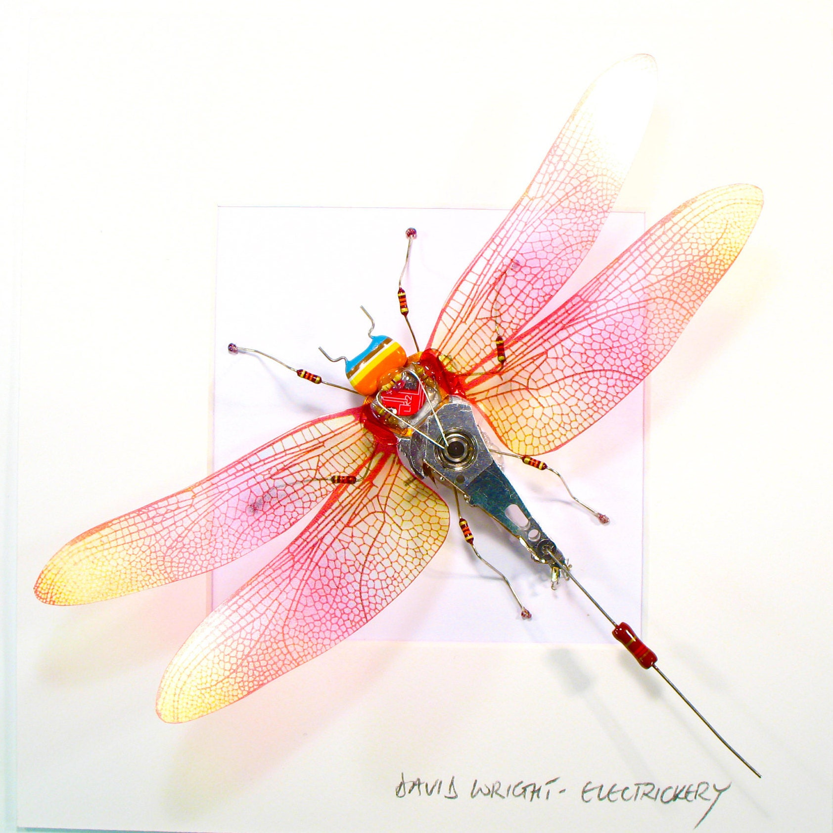 Wallpaper Iridescent dragonfly wings 1920x1200 HD Picture ... |Iridescent Dragonflies