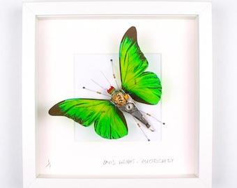 Green Butterfly Framed Wall Art | Recycled Sculpture