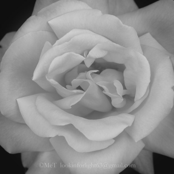 Flower Photo Art Rose Photo Art Black White Floral Print Abstract Macro Flower Photo Abstract Close Up View Of Rose O Keefe Inspired